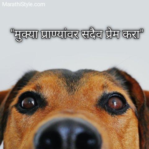 Prem Quotes in Marathi
